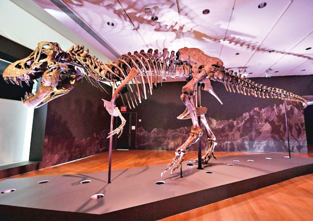 Subasta de un dinosaurio podría alcanzar $8 millones