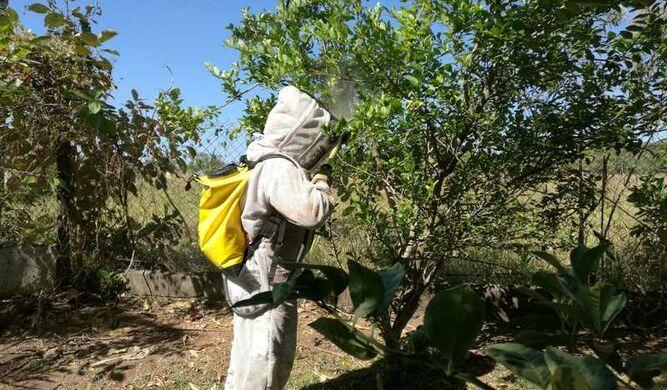 Más de 5 mil casos de abejas africanizadas atienden los bomberos