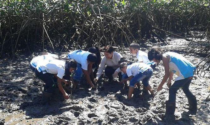 Niños conservan y protegen manglar en Remedios, provincia de Chiriquí