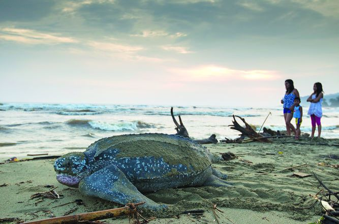 El viaje de la tortuga Soca