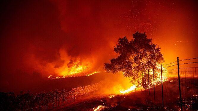 Incendio forestal avanza con fuerza en región vinícola de California