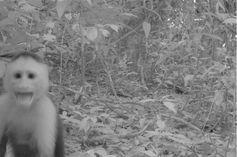 Imágenes de la vida silvestre, a favor de la ciencia