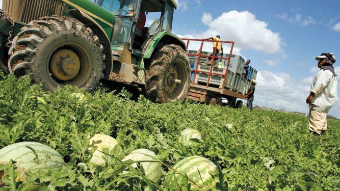 Definen hoja de ruta para reactivar el agro en Azuero