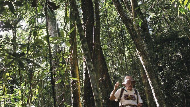 Los bosques tropicales pierden el aliento