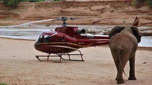 Dispositivos tecnológicos ayudan en la conservación de especies en peligro