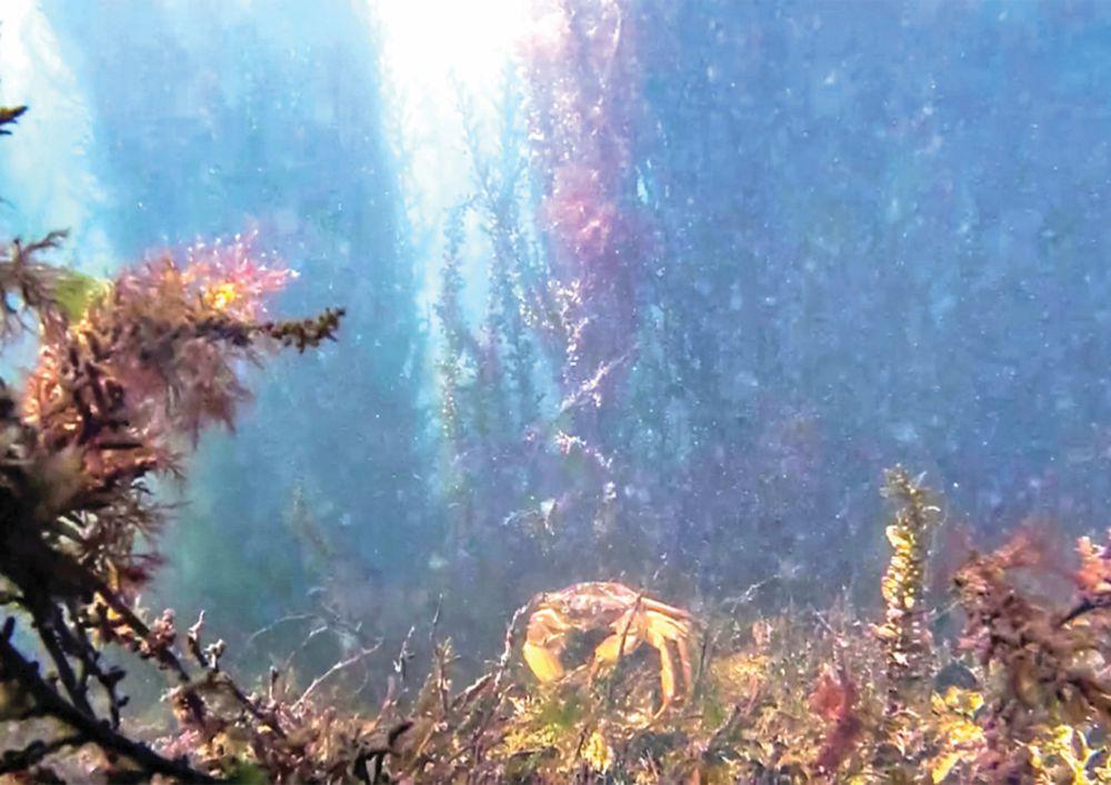 El ecosistema de Venecia sale a la luz con el confinamiento