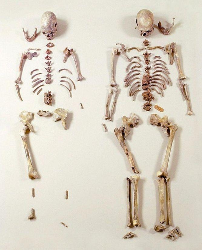 La aparición de la agricultura hizo más frágiles los huesos humanos