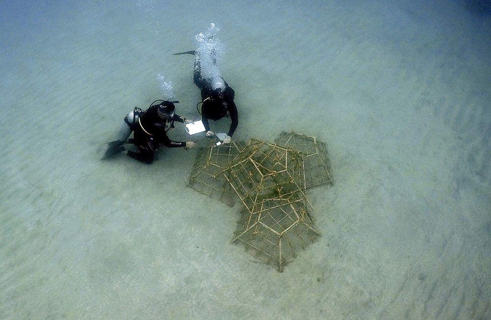 Los jardineros del mar que restauran arrecifes en Portobelo