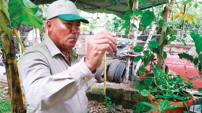 Colón, la región de salud con mayor cantidad de casos de dengue: Minsa