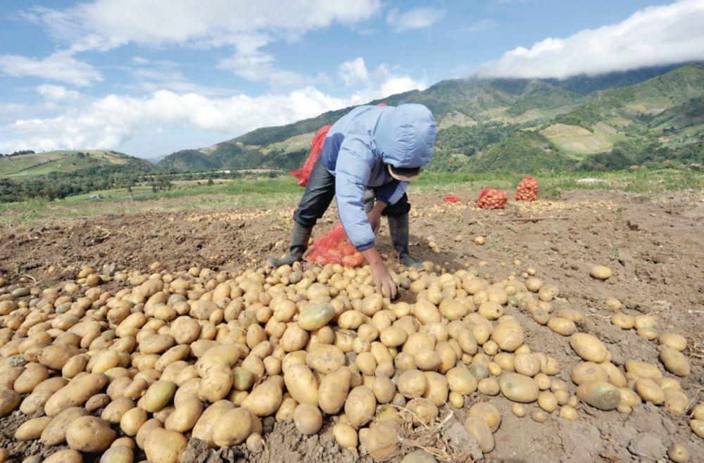 Sobreproducción y la baja demanda castiga al agro