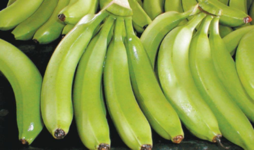 Pérdidas millonarias deja huelga bananera en Bocas del Toro