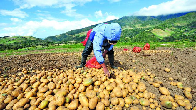 Importaciones colapsan al agro