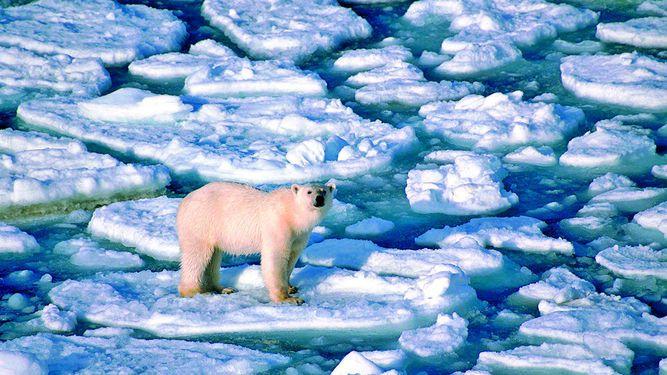Récords de calor hacen de 2016 un año lúgubre para el clima