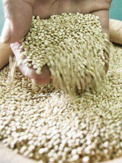 Contrabando afecta precio de la quinua