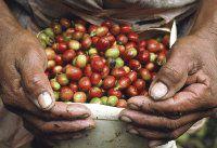 Costa Rica exporta más piña y café
