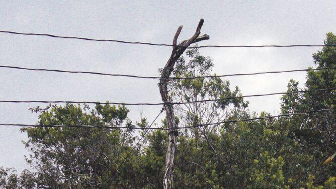 Naturgy duplicará circuitos eléctricos