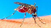 Mosquitos y la migración asistida por humanos