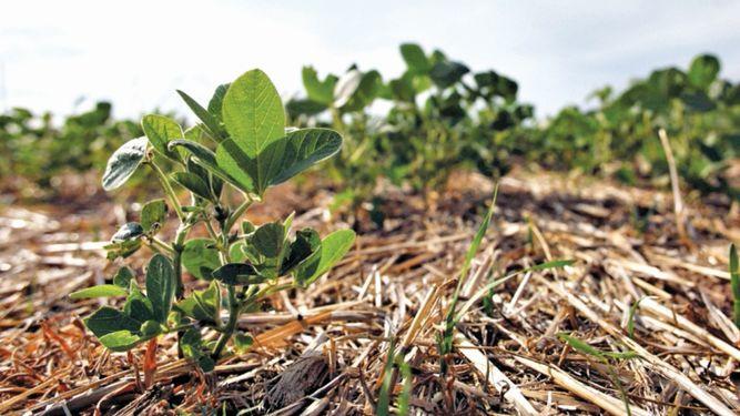 Bajas temperaturas beneficiaron a productores de trigo argentinos