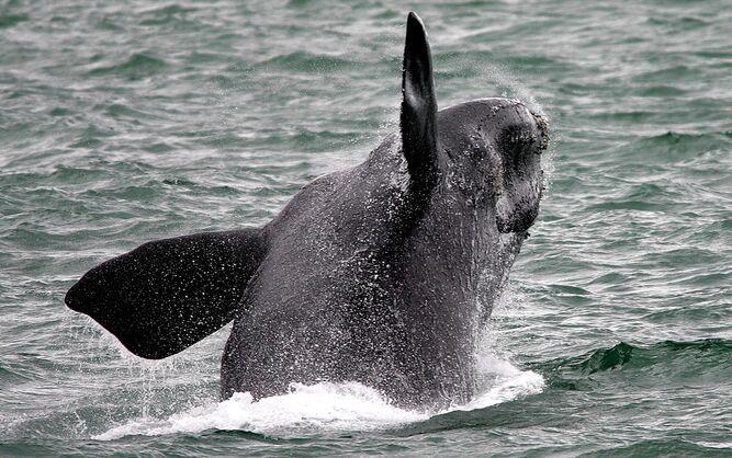 Tiburones blancos y ballenas han abandonado Ciudad del Cabo