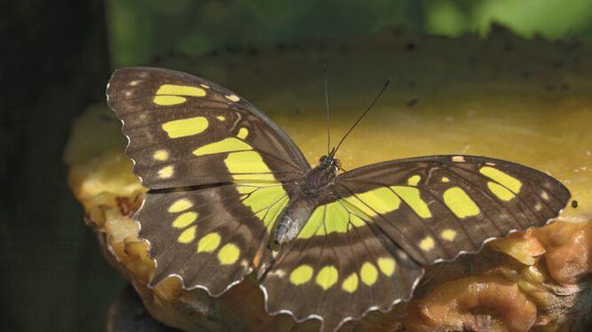 Abundancia de peces y mariposas: la realidad 500 años después