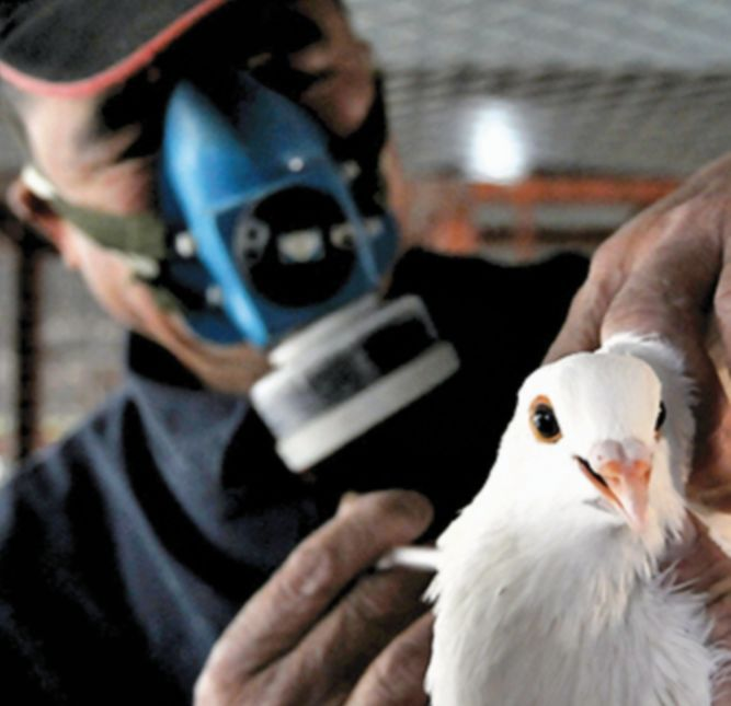 OIE confirma brote de gripe aviar en granjas de México