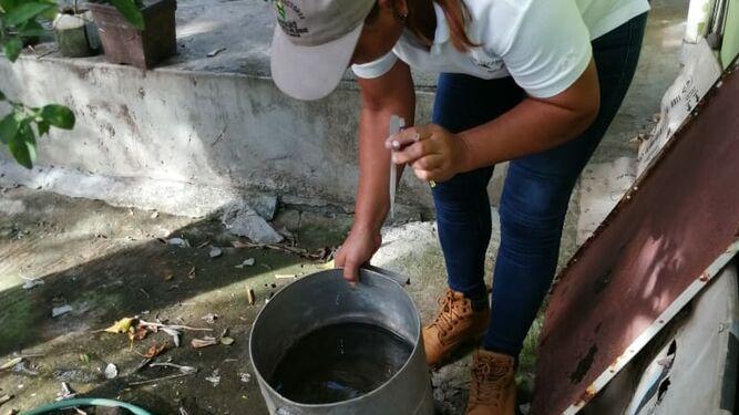Autoridades de salud de Herrera en alerta por incremento de los casos de dengue
