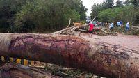 Varios árboles caídos y desprendimientos de estructuras en  Veraguas