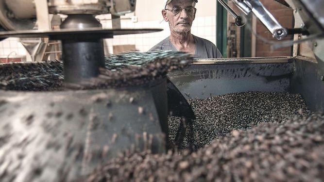 Café arábiga será más caro por clima seco