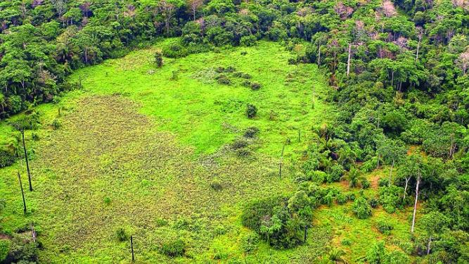 Ambiente presenta propuesta de incentivo forestal
