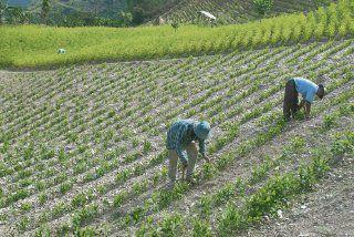 Bolivia aumenta producción