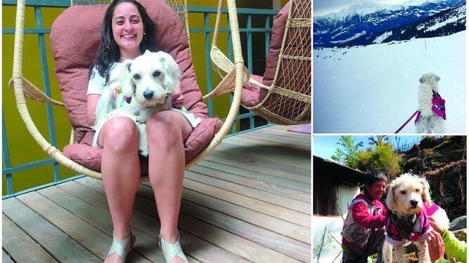 Fito, el perro que enseña a otros a viajar