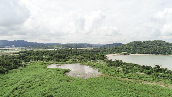 CIAM solicita a la UABR excluir bosques de subastas públicas