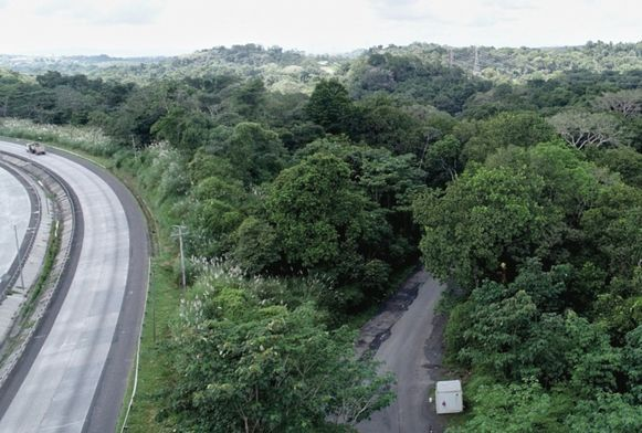 Bosques, en riesgo por nueva carretera hacia Panamá Oeste