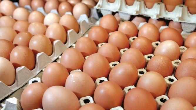 Retiran más de 200 millones de huevos contaminados en EU