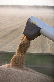 Elevan previsión para cosecha de granos