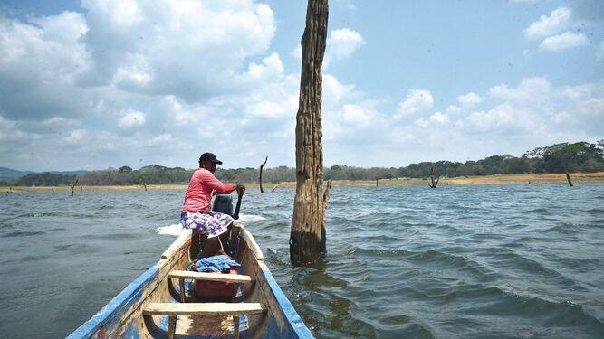 Estudios de río Indio y Bayano, con 70% y 85% de avance
