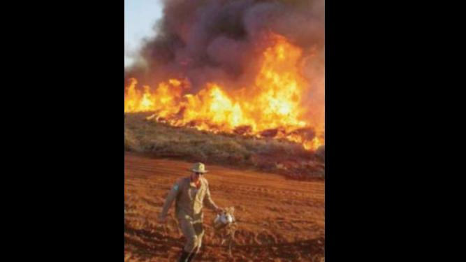 Brasil: se quema El Pantanal, el mayor humedal del planeta