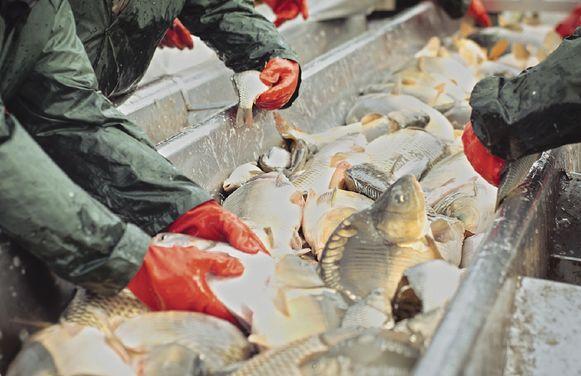 La acuicultura, una alternativa ecológica, práctica y en crecimiento