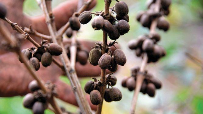 Colombia quiere subir producción de café
