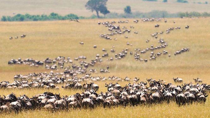 África busca atraer a cada vez más visitantes