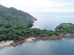 Batalla por Boná enfrenta vida silvestre marina con multimillonario proyecto