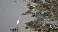 Basura marina: 'sopa de plástico' para los peces