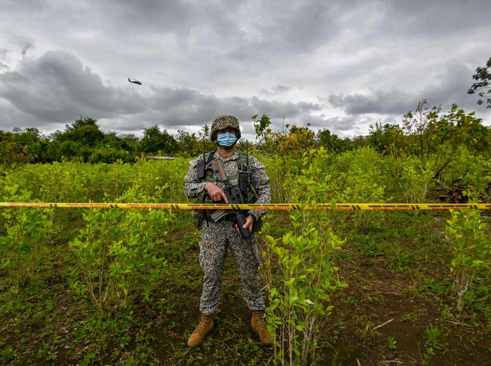 Colombia reduce cultivos ilegales pero sigue siendo el mayor productor de cocaína