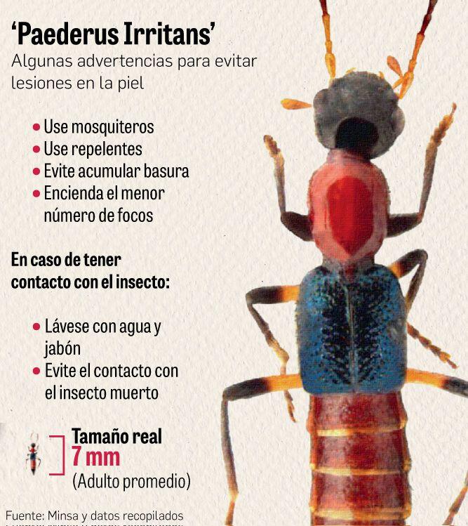 Apuestan por fumigación y campaña de divulgación contra insecto en Darién