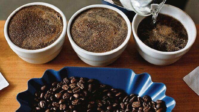 ¿Estamos en medio de una abundancia o escasez de café?