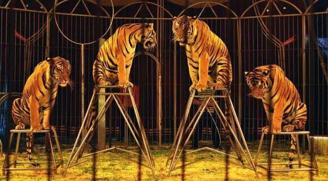 París prohibirá 'shows' de animales salvajes en circos