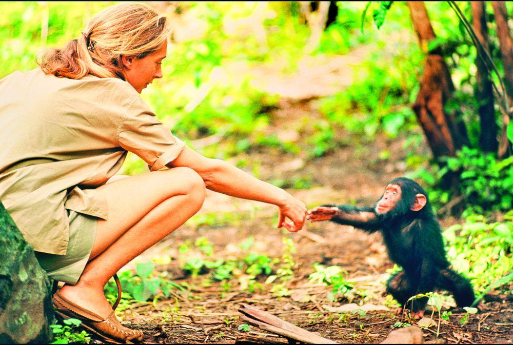 Jane Goodall, una mujer libre