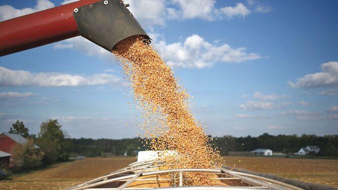 Productores de maíz de EU pierden terreno
