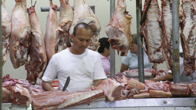 Sacrificio porcino disminuyó 8.6% entre enero y julio
