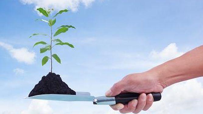 Lo que conlleva plantar un millón de hectáreas